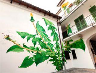 Жизнерадостные сорняки покоряют городское пространство