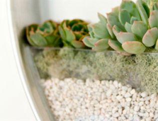 Идеальный мини-сад для жилого пространства