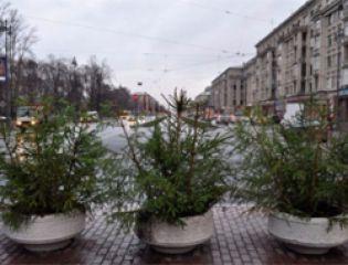 Новогодние елки после праздника можно отправить на переработку