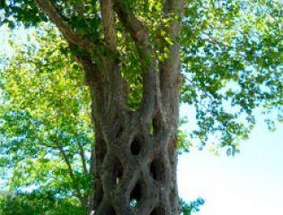 Чудо-деревья, созданные Акселем Эрландсоном